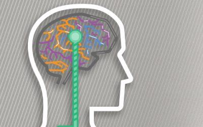 Psycho-Sensory Branding: A Whole-Brain Approach